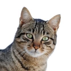 cat-05